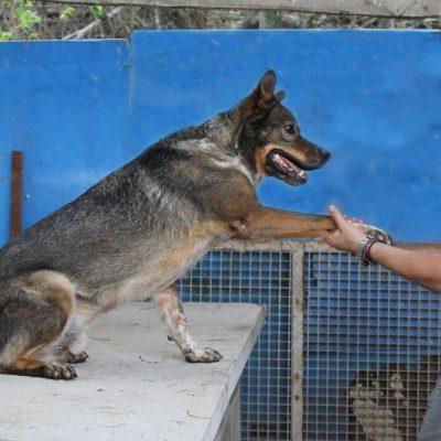 la-camada-protectora-perros-gatos-guadalajara-adopcion