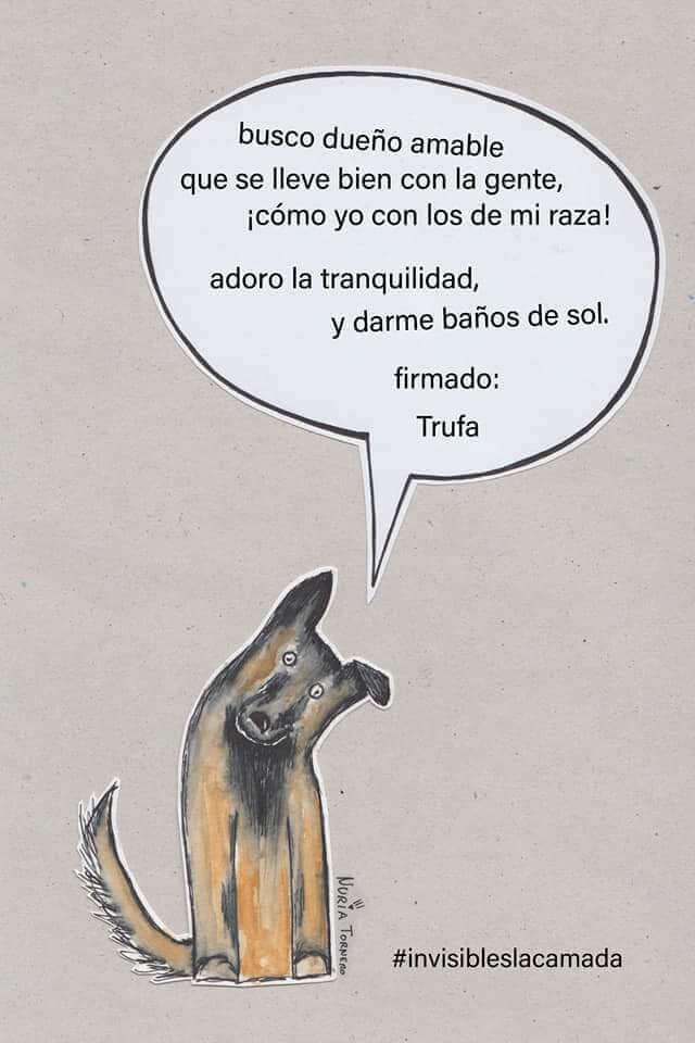 adopcioneslacamada@hotmail.es
